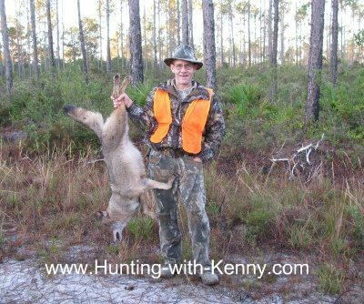Coyote from Apalachicola National Forest WMA